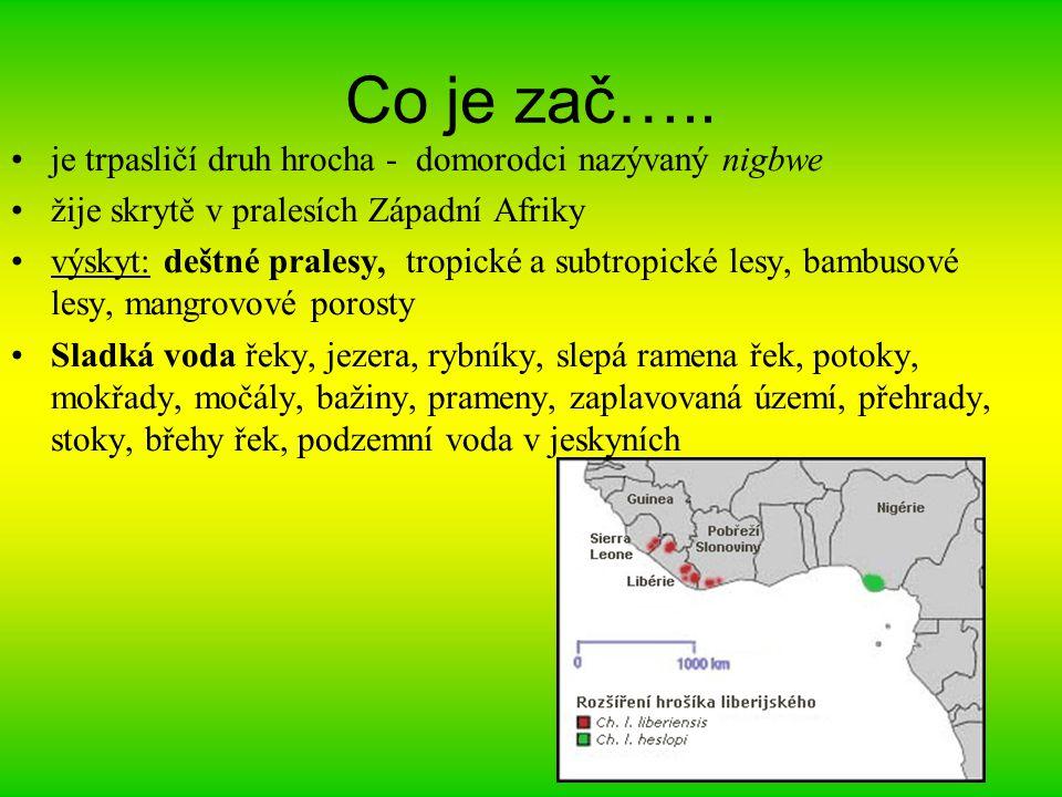 Hrošík v číslech Délka těla 1,7-1,9 m Výška 80 cm Hmotnost 250-300 kg Počet mláďat 1 Délka života v přírodě neznámá; v zoo až 50 let Březost trvá okolo 7 měsíců.
