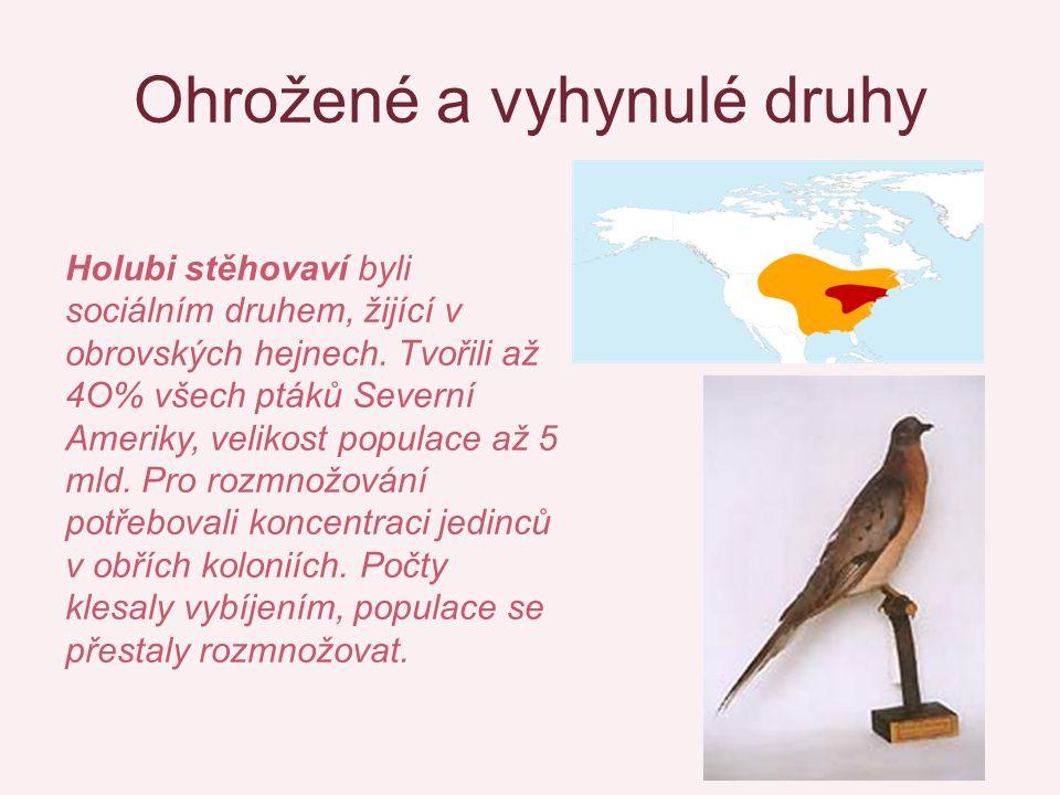 Ohrožené a vyhynulé druhy Holubi stěhovaví byli sociálním druhem, žijící v obrovských hejnech. Tvořili až 4O% všech ptáků Severní Ameriky, velikost po