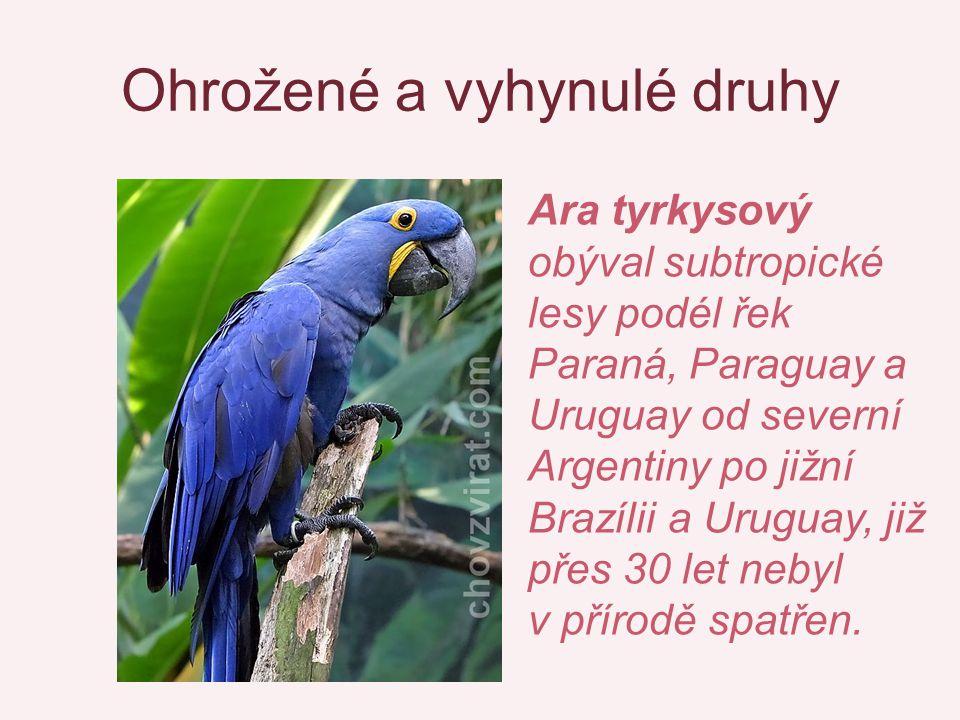 Ohrožené a vyhynulé druhy Ara tyrkysový obýval subtropické lesy podél řek Paraná, Paraguay a Uruguay od severní Argentiny po jižní Brazílii a Uruguay,