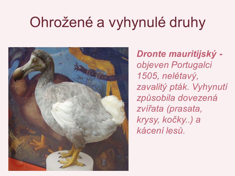 Ohrožené a vyhynulé druhy Dronte mauritijský - objeven Portugalci 1505, nelétavý, zavalitý pták. Vyhynutí způsobila dovezená zvířata (prasata, krysy,