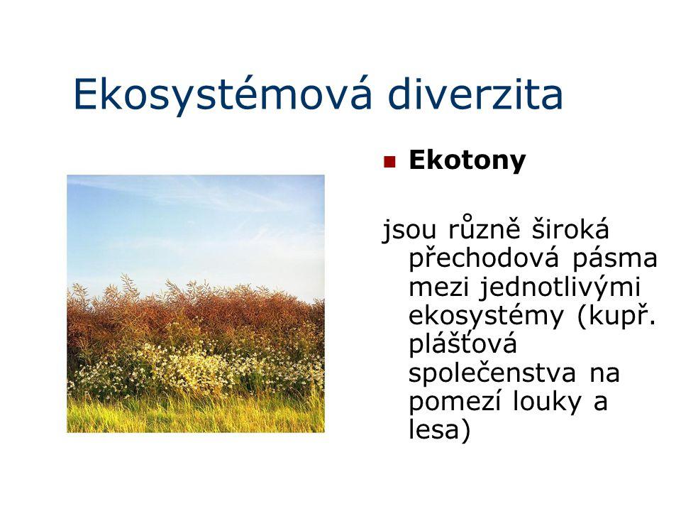 Ekosystémová diverzita Ekotony jsou různě široká přechodová pásma mezi jednotlivými ekosystémy (kupř. plášťová společenstva na pomezí louky a lesa)