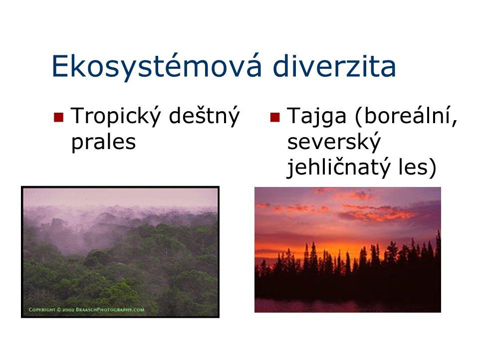 Ekosystémová diverzita Tropický deštný prales Tajga (boreální, severský jehličnatý les)