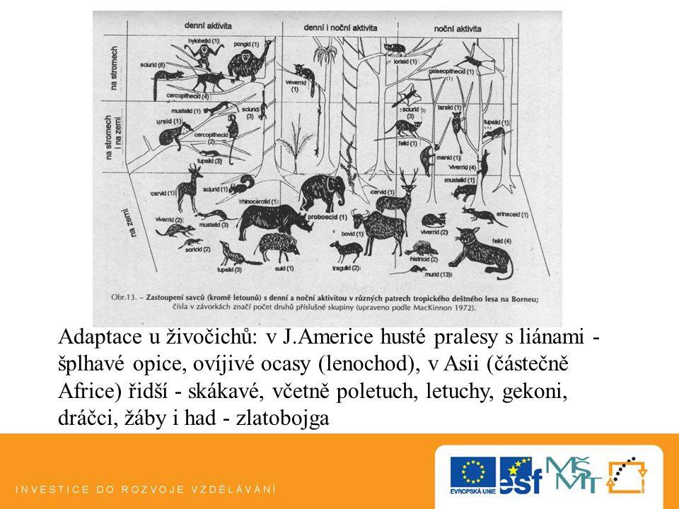 Adaptace u živočichů: v J.Americe husté pralesy s liánami - šplhavé opice, ovíjivé ocasy (lenochod), v Asii (částečně Africe) řidší - skákavé, včetně