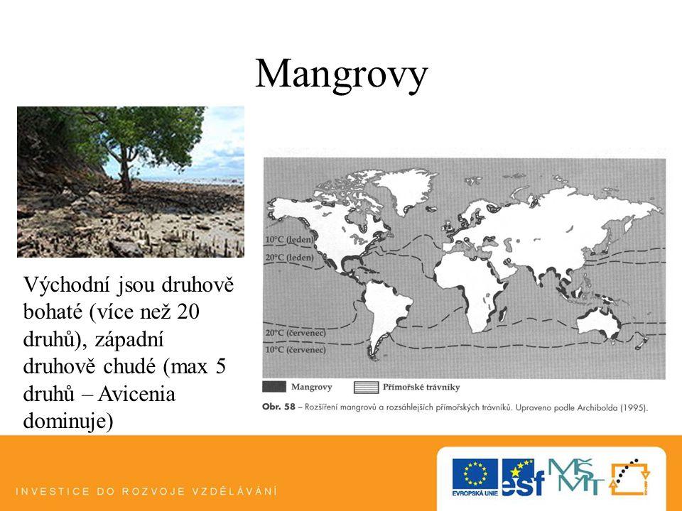 Mangrovy Východní jsou druhově bohaté (více než 20 druhů), západní druhově chudé (max 5 druhů – Avicenia dominuje)