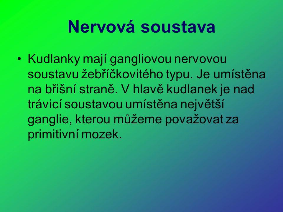 Nervová soustava Kudlanky mají gangliovou nervovou soustavu žebříčkovitého typu. Je umístěna na břišní straně. V hlavě kudlanek je nad trávicí soustav