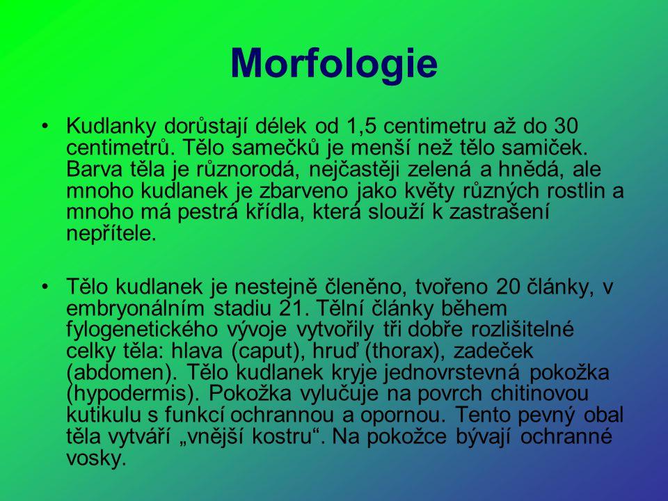 Morfologie Kudlanky dorůstají délek od 1,5 centimetru až do 30 centimetrů. Tělo samečků je menší než tělo samiček. Barva těla je různorodá, nejčastěji