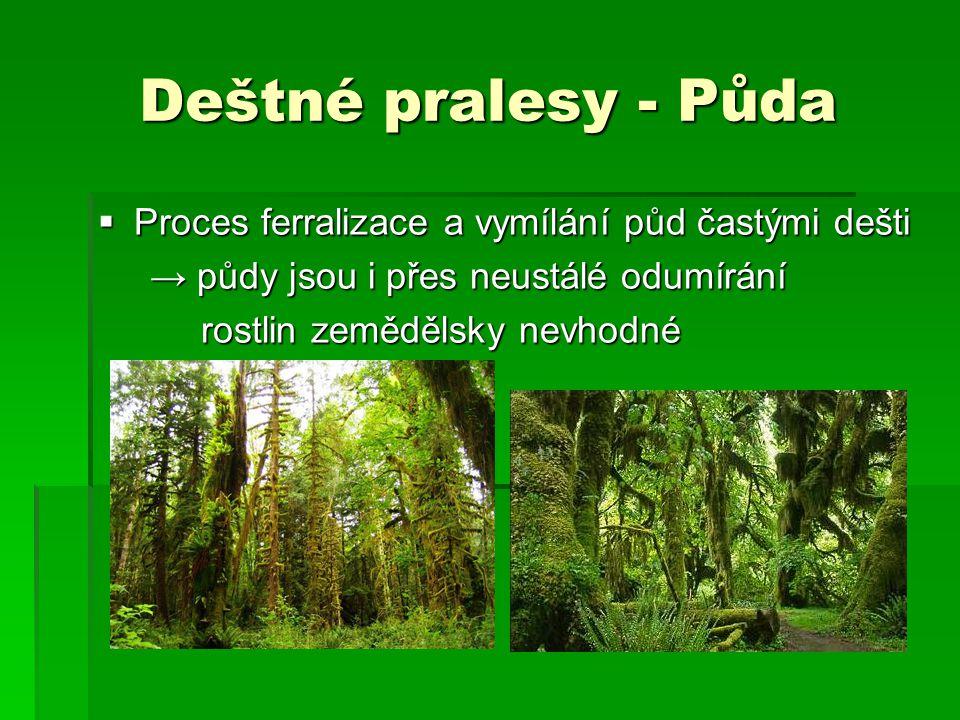 Deštné pralesy - Půda  Proces ferralizace a vymílání půd častými dešti → půdy jsou i přes neustálé odumírání → půdy jsou i přes neustálé odumírání ro
