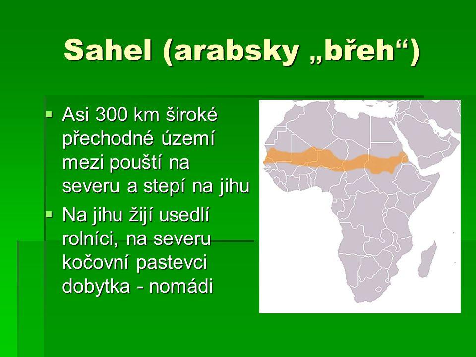 """Sahel (arabsky """" břeh """" )  Asi 300 km široké přechodné území mezi pouští na severu a stepí na jihu  Na jihu žijí usedlí rolníci, na severu kočovní p"""