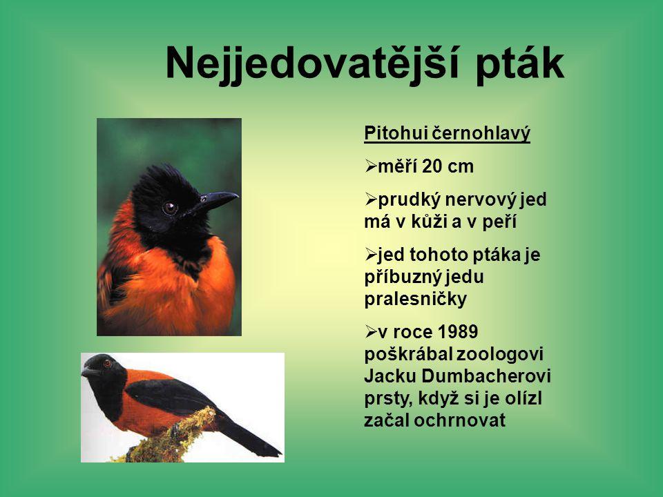 Nejjedovatější pták Pitohui černohlavý  měří 20 cm  prudký nervový jed má v kůži a v peří  jed tohoto ptáka je příbuzný jedu pralesničky  v roce 1
