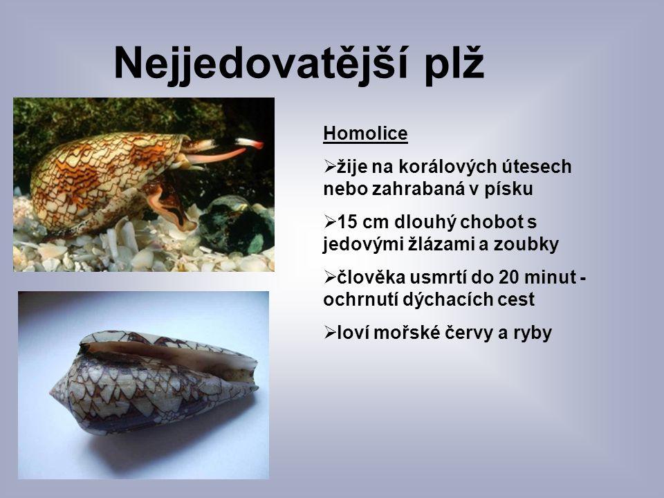 Nejjedovatější plž Homolice  žije na korálových útesech nebo zahrabaná v písku  15 cm dlouhý chobot s jedovými žlázami a zoubky  člověka usmrtí do