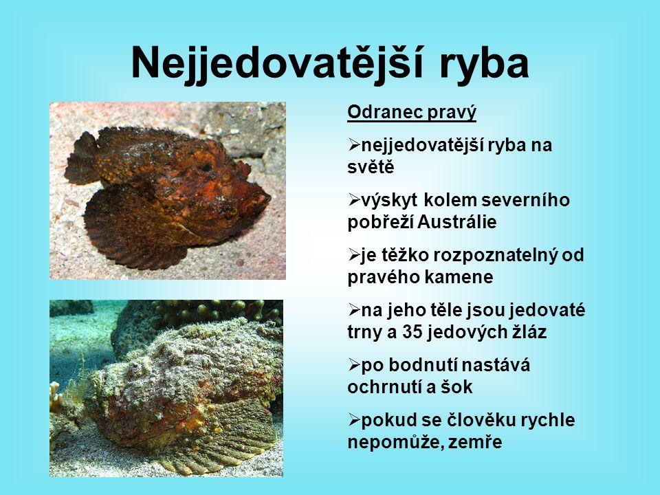 Nejjedovatější žába Pralesnička strašná  max.