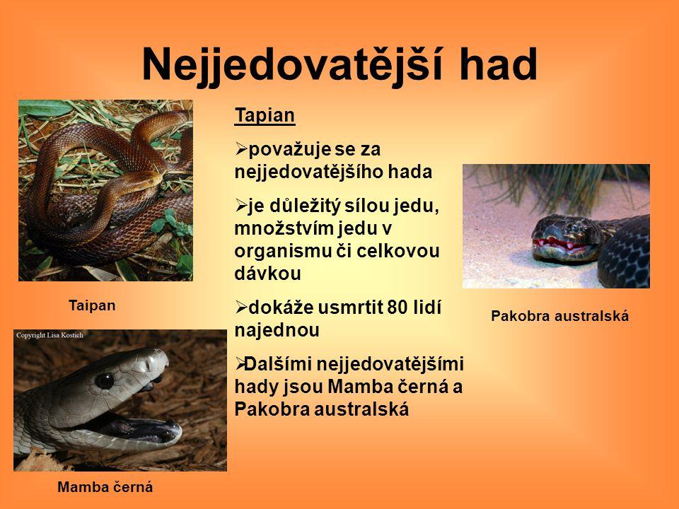 Nejjedovatější had Taipan Pakobra australská Mamba černá Tapian  považuje se za nejjedovatějšího hada  je důležitý sílou jedu, množstvím jedu v orga