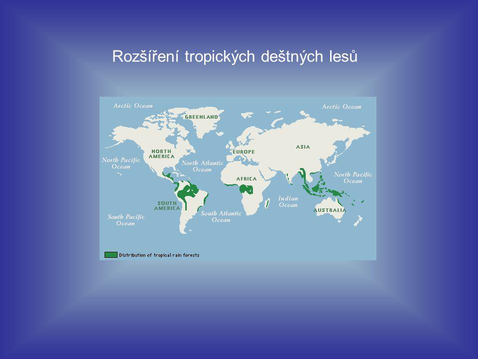 Tropické deštné pralesy poskytují domov milionům druhů rostlin a živočichů.