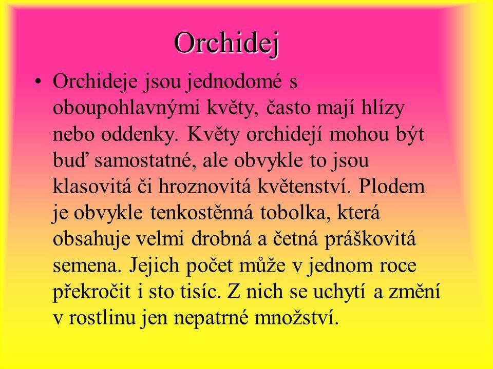 Orchidej Orchideje jsou jednodomé s oboupohlavnými květy, často mají hlízy nebo oddenky.