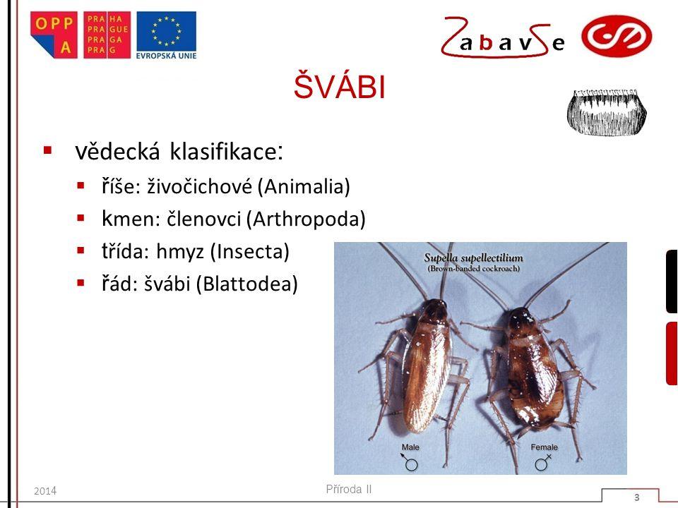 ŠVÁBI  v ědecká klasifikace :  ř íše: živočichové (Animalia)  k men: členovci (Arthropoda)  t řída: hmyz (Insecta)  ř ád: švábi (Blattodea) Příro