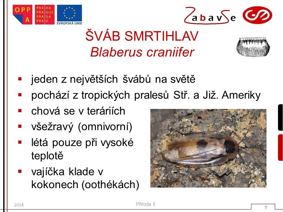 ZAJÍMAVOST NA ZÁVĚR  název švába pochází z německého názvu pro tento hmyz (Schaben), nesouvisí původně nijak se Švábskem (Schwaben)  ke stejnému rodu ale patří i rus domácí (Deutsche Schabe, šváb německý), který je v Polsku nazýván Karaczan prusak (šváb pruský), pro jeho rozšíření z Pruska do Ruska Příroda II 18 2014
