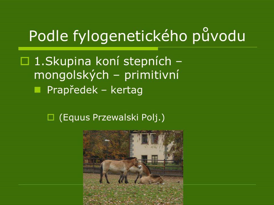 Podle fylogenetického původu  1.Skupina koní stepních – mongolských – primitivní Prapředek – kertag  (Equus Przewalski Polj.)