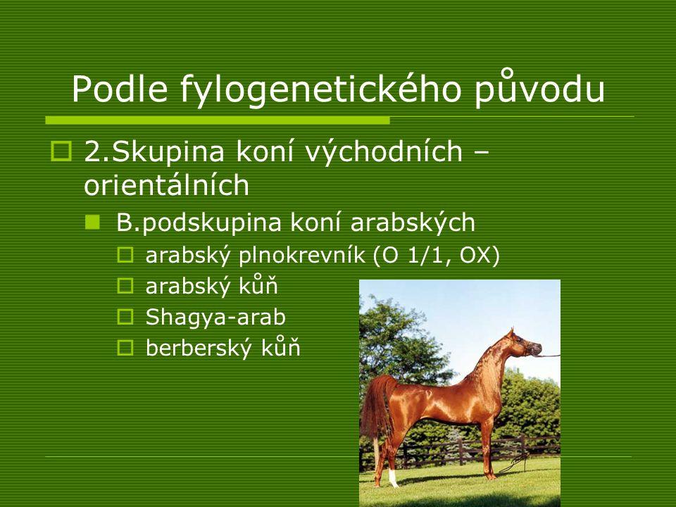 Podle fylogenetického původu  2.Skupina koní východních – orientálních B.podskupina koní arabských  arabský plnokrevník (O 1/1, OX)  arabský kůň 