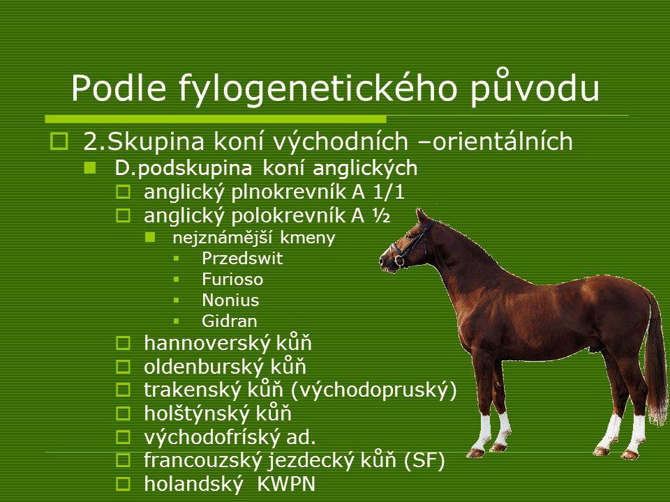 Podle fylogenetického původu  2.Skupina koní východních –orientálních D.podskupina koní anglických  anglický plnokrevník A 1/1  anglický polokrevní