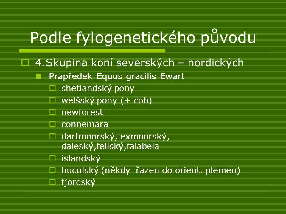 Podle fylogenetického původu  4.Skupina koní severských – nordických Prapředek Equus gracilis Ewart  shetlandský pony  welšský pony (+ cob)  newfo