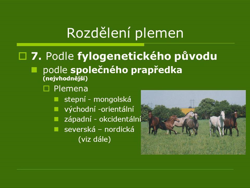 Rozdělení plemen  7. Podle fylogenetického původu podle společného prapředka (nejvhodnější)  Plemena stepní - mongolská východní -orientální západní