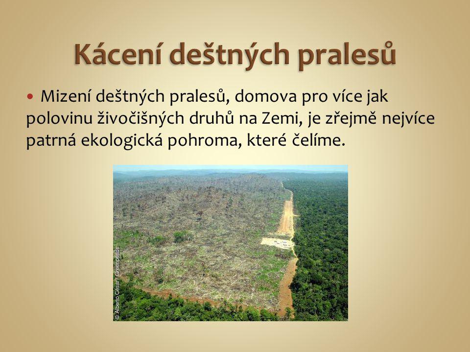 Mizení deštných pralesů, domova pro více jak polovinu živočišných druhů na Zemi, je zřejmě nejvíce patrná ekologická pohroma, které čelíme.