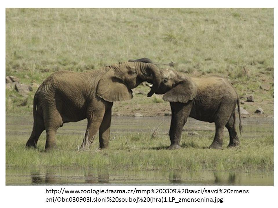 http://www.zoologie.frasma.cz/mmp%200309%20savci/savci%20zmens eni/Obr.030903l.sloni%20souboj%20(hra)1.LP_zmensenina.jpg