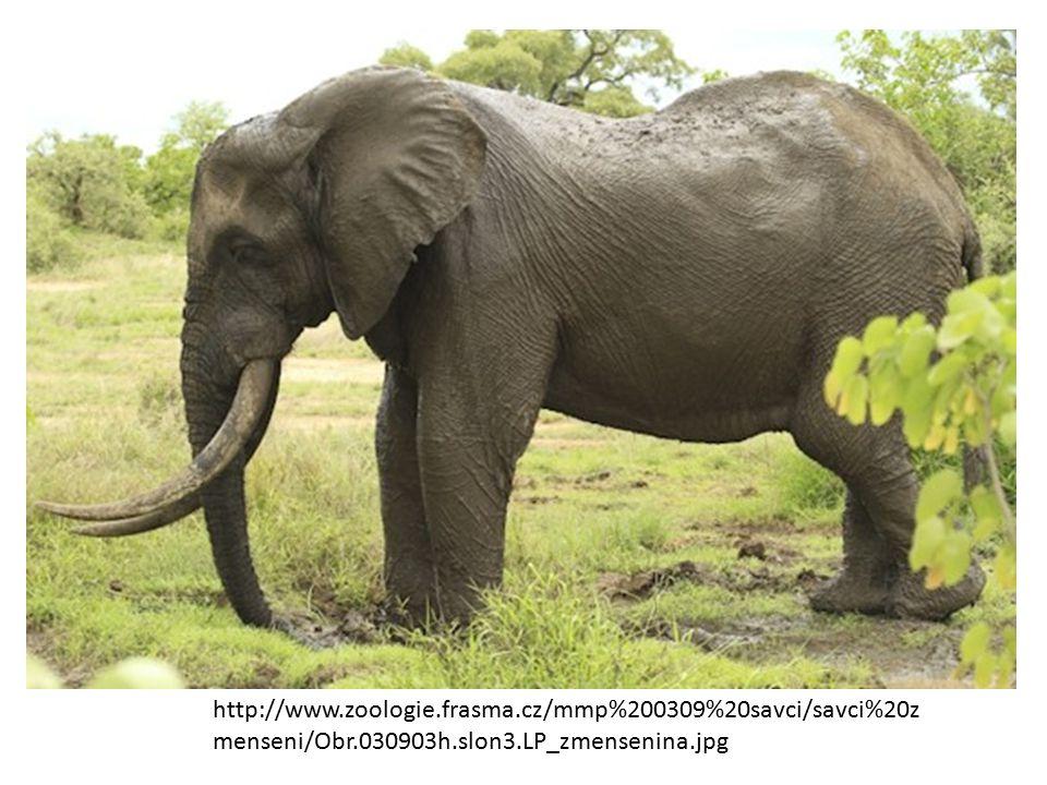 http://www.zoologie.frasma.cz/mmp%200309%20savci/savci%20z menseni/Obr.030903h.slon3.LP_zmensenina.jpg