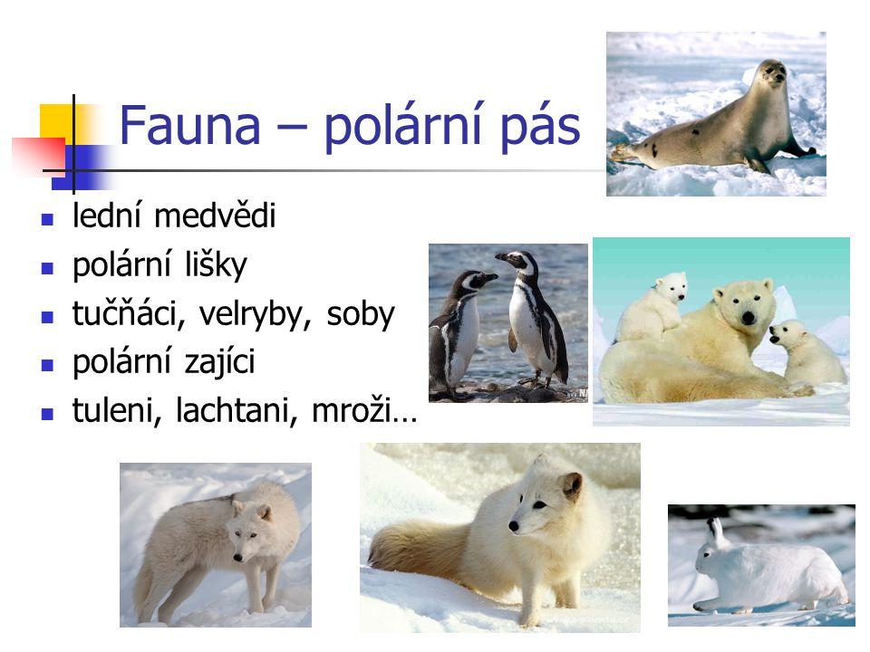 Fauna – polární pás lední medvědi polární lišky tučňáci, velryby, soby polární zajíci tuleni, lachtani, mroži…