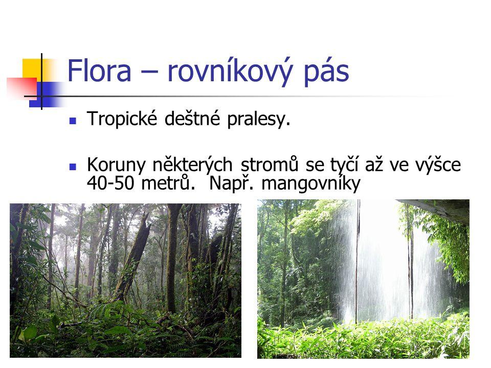 Flora – rovníkový pás Tropické deštné pralesy. Koruny některých stromů se tyčí až ve výšce 40-50 metrů. Např. mangovníky