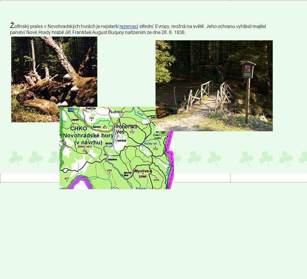 Ž ofínský prales v Novohradských horách je nejstarší rezervací střední Evropy, možná na světě. Jeho ochranu vyhlásil majitel panství Nové Hrady hrabě