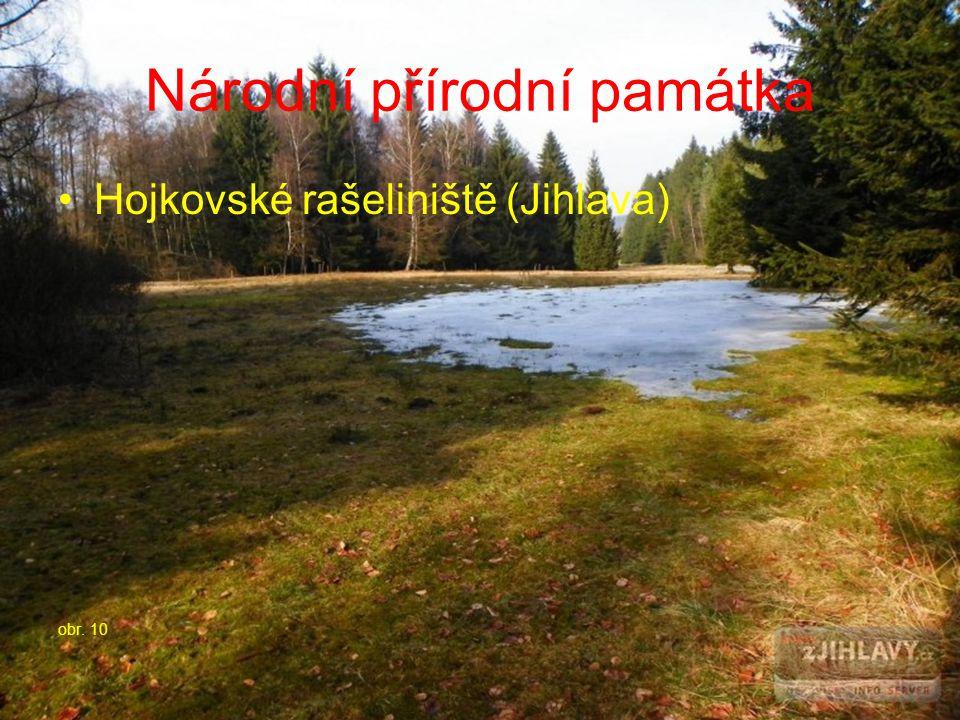Národní přírodní památka Hojkovské rašeliniště (Jihlava) obr. 10