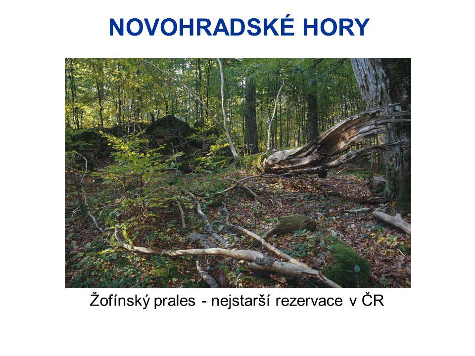 NOVOHRADSKÉ HORY Žofínský prales - nejstarší rezervace v ČR