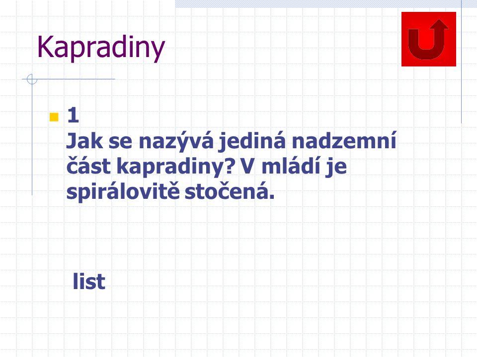 Kapradiny 1 Jak se nazývá jediná nadzemní část kapradiny? V mládí je spirálovitě stočená. list