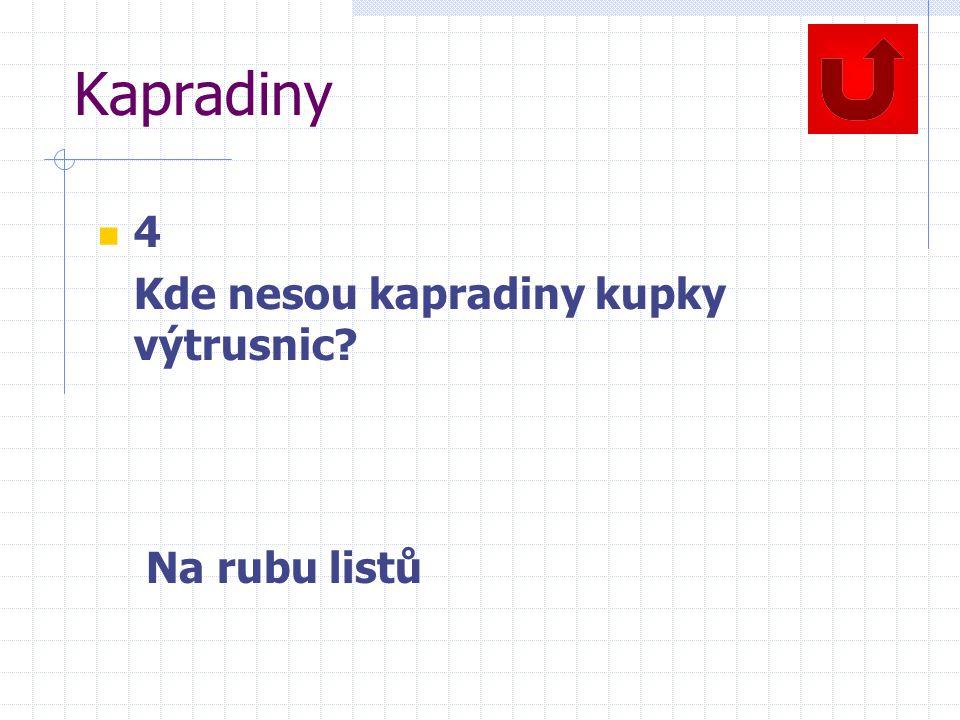Kapradiny 4 Kde nesou kapradiny kupky výtrusnic? Na rubu listů