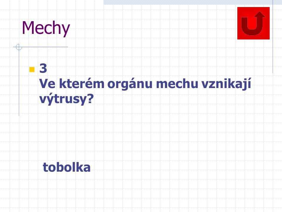 Mechy 3 Ve kterém orgánu mechu vznikají výtrusy? tobolka