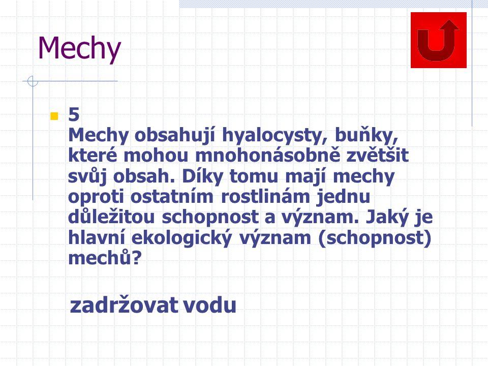 Mechy 5 Mechy obsahují hyalocysty, buňky, které mohou mnohonásobně zvětšit svůj obsah.