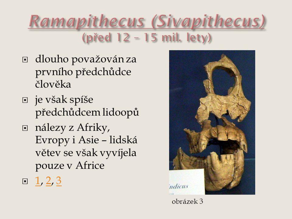  dlouho považován za prvního předchůdce člověka  je však spíše předchůdcem lidoopů  nálezy z Afriky, Evropy i Asie – lidská větev se však vyvíjela