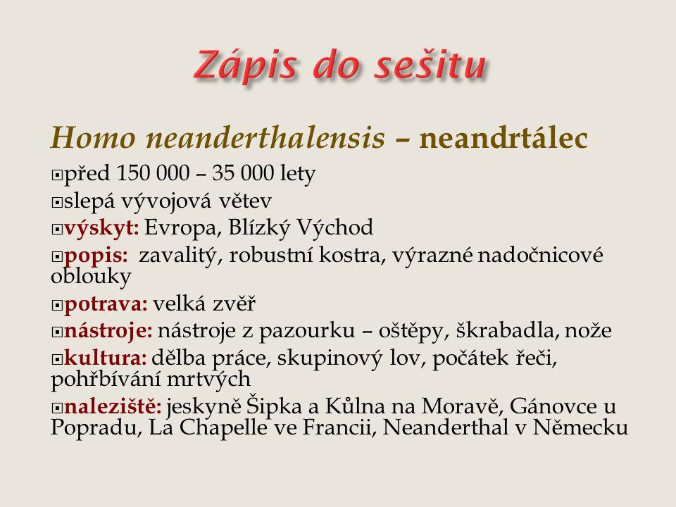 Homo neanderthalensis – neandrtálec  před 150 000 – 35 000 lety  slepá vývojová větev  výskyt: Evropa, Blízký Východ  popis: zavalitý, robustní ko