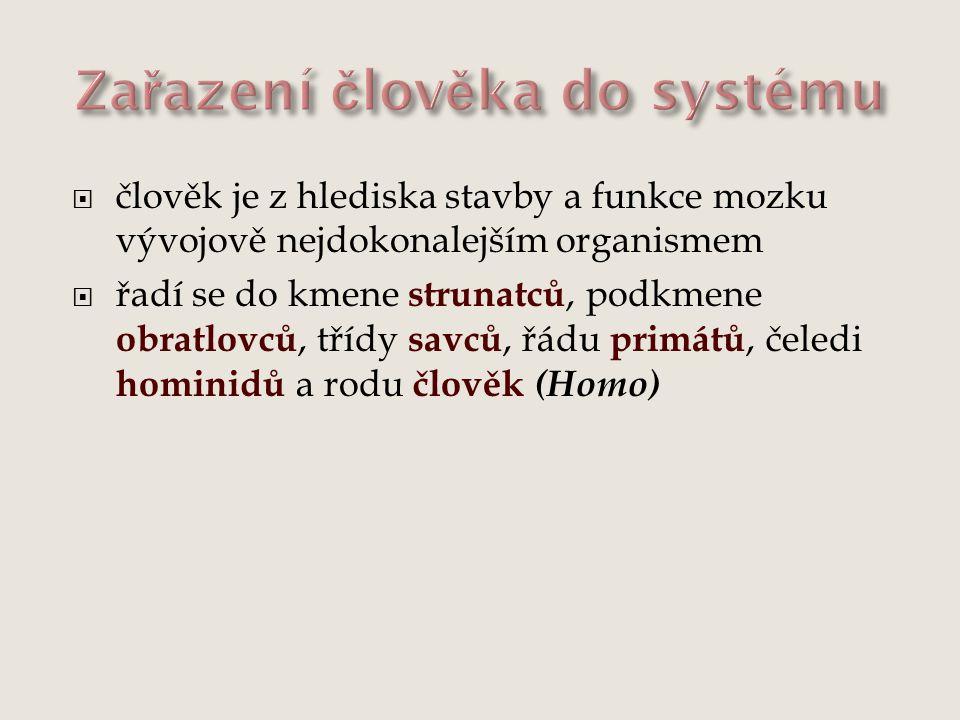 Zařazení člověka do systému  člověk:  kmen strunatci  podkmen obratlovci  třída savci  řád primáti  čeleď hominidi  rod člověk (Homo)