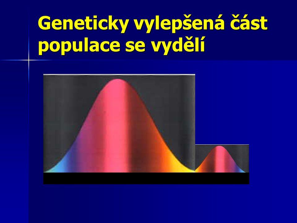 Geneticky vylepšená část populace se vydělí