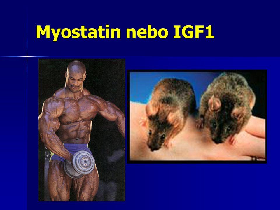 Myostatin nebo IGF1