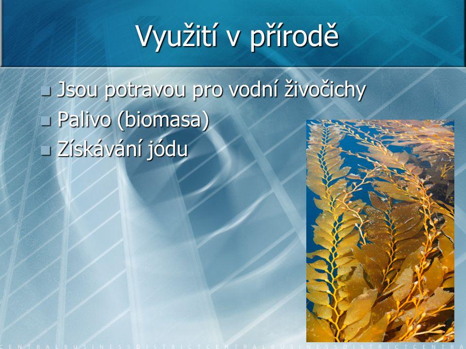 Využití v přírodě Jsou potravou pro vodní živočichy Jsou potravou pro vodní živočichy Palivo (biomasa) Palivo (biomasa) Získávání jódu Získávání jódu