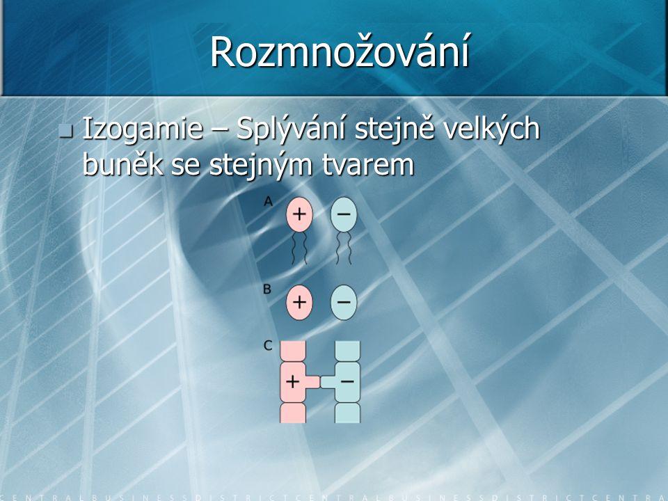 Rozmnožování Izogamie – Splývání stejně velkých buněk se stejným tvarem Izogamie – Splývání stejně velkých buněk se stejným tvarem