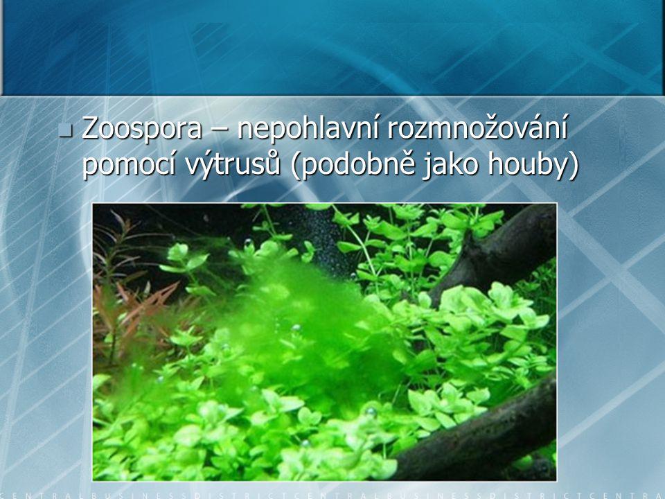 Zoospora – nepohlavní rozmnožování pomocí výtrusů (podobně jako houby) Zoospora – nepohlavní rozmnožování pomocí výtrusů (podobně jako houby)