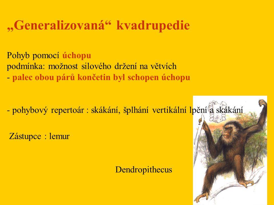 Proconsul africanus