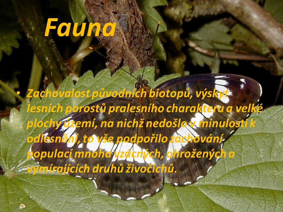 Fauna Zachovalost původních biotopů, výskyt lesních porostů pralesního charakteru a velké plochy území, na nichž nedošlo v minulosti k odlesnění, to v