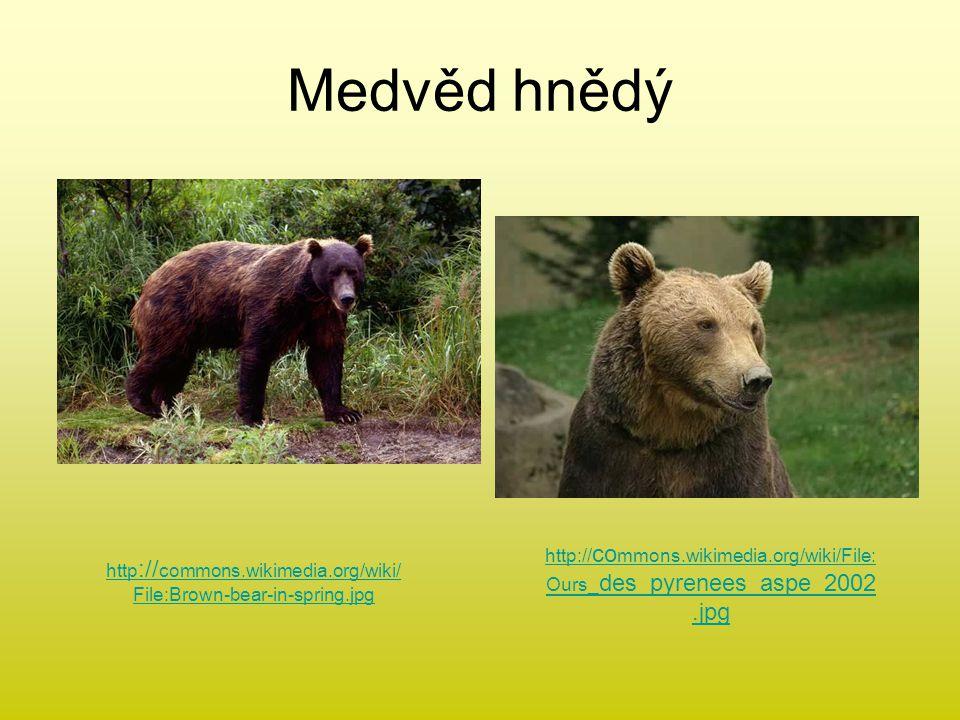 Medvěd hnědý http :// commons.wikimedia.org/wiki/ File:Brown-bear-in-spring.jpg http:// co mmons.wikimedia.org/wiki/File: Ours_ des_pyrenees_aspe_2002