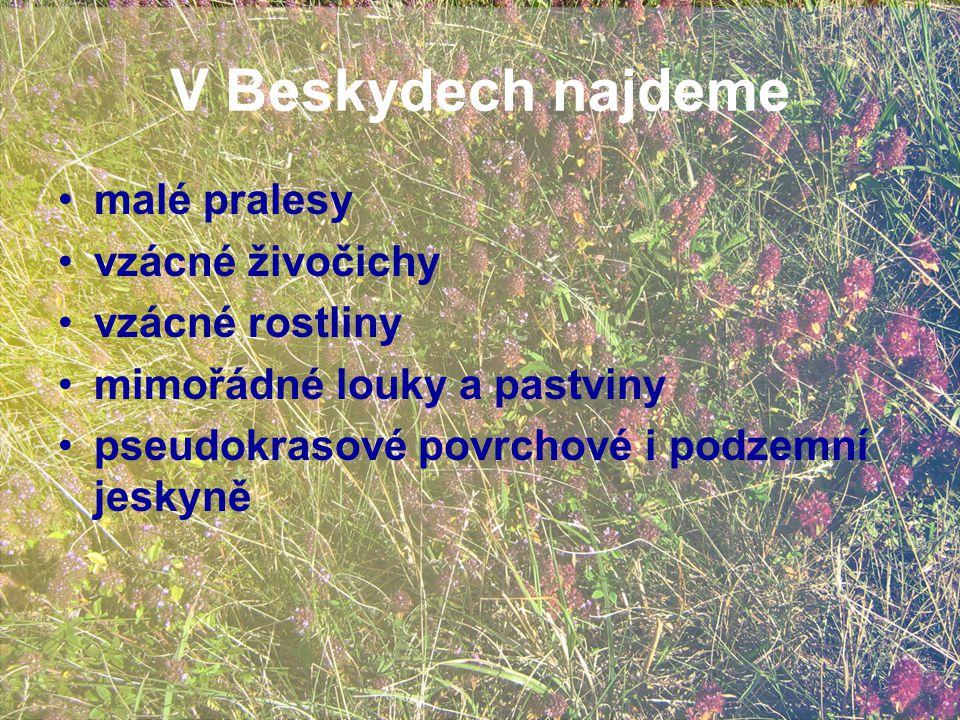 V Beskydech najdeme malé pralesy vzácné živočichy vzácné rostliny mimořádné louky a pastviny pseudokrasové povrchové i podzemní jeskyně