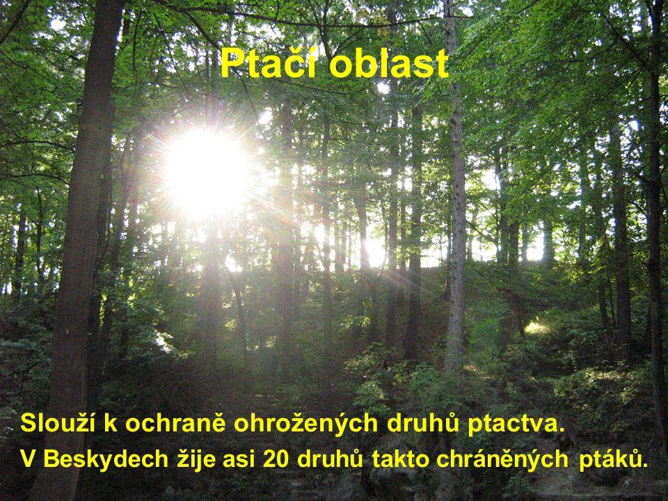 Zdroje fotografií © Vlasta Foltová – obr. str. 2, 3, 4, 5, 26, 27